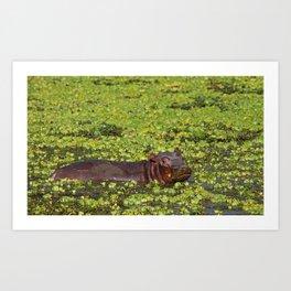 Little Hippo, Africa wildlife Art Print