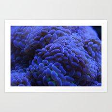 Blue Bubble Coral Art Print