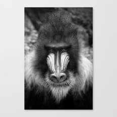 King Monkey Canvas Print
