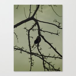 Tangled in Branches Canvas Print