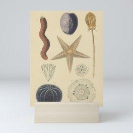 Sea Urchin And Starfish Mini Art Print
