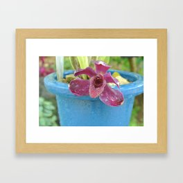 blue potted orchid Framed Art Print