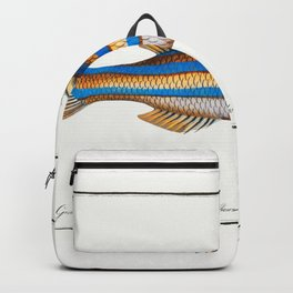 Marcus Elieser Bloch - Blue-striped Gilt-head Backpack