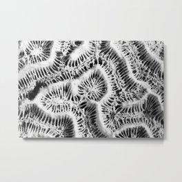 Brain Coral Metal Print