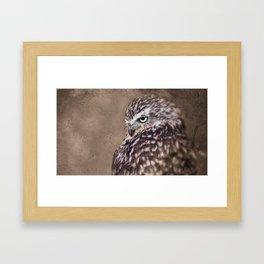 Burrowing Owl Framed Art Print