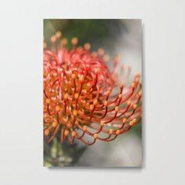 Exotic Pin Cushion Protea Flower- Botanical Photography #Society6 Metal Print