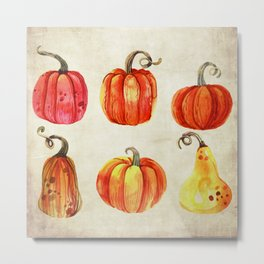 Autumn Gourds - Pumpkin Watercolor on Antique White Metal Print