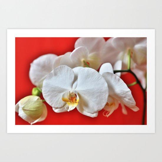 Orchids HDR Art Print