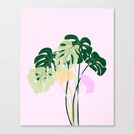 monstera plant on pink background Canvas Print
