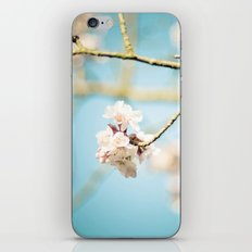 Cherry Blossom, Pink Flowers and Blue Sky. iPhone & iPod Skin