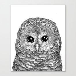 Tiny Owl Canvas Print
