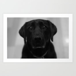 Lottie Dog Art Print
