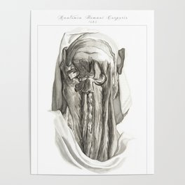 Human Anatomy Art Print MUSCLE CERVICAL BONES Vintage Anatomy, doctor medical art, Antique Book Plat Poster