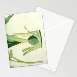 Flower 1433 eulophia mackaiana Mr Mackay s Eulophia 216 Stationery Cards