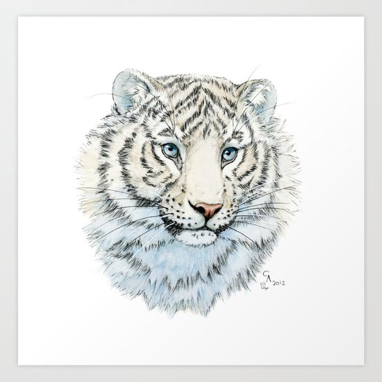 Young White Tiger  Art Print