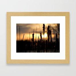 Golden Cattails Framed Art Print