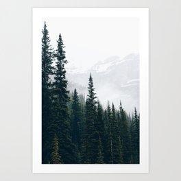 Evergreens in the fog Art Print