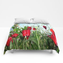 Landscape Close Up Poppies Against Morning Sky Comforters