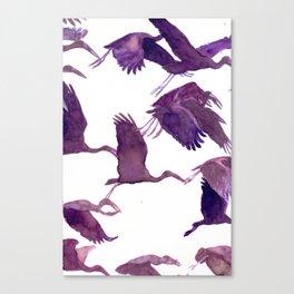 Open billed storks Canvas Print