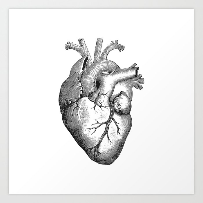 Real Anatomical Human Heart Drawing Art Print by azza1070 | Society6
