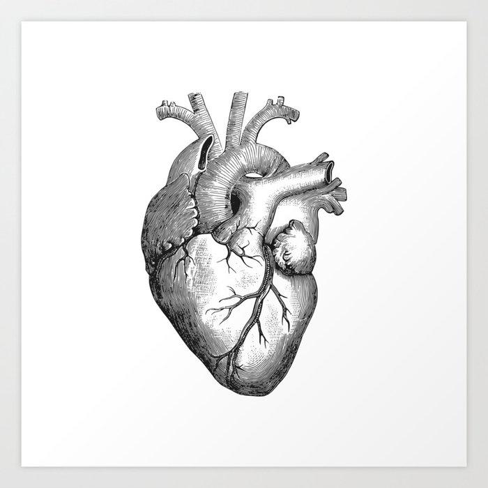 Human Heart Art - Best Clipart Gallery •