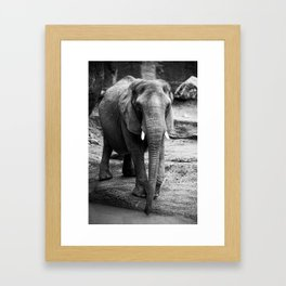 Gentle One Framed Art Print