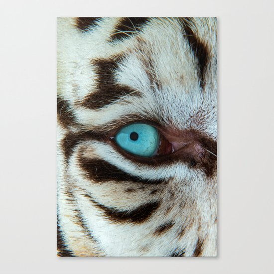 WHITE TIGER BEAUTY Canvas Print