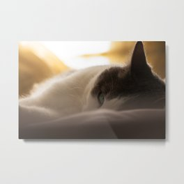 Sunday afternoon Metal Print