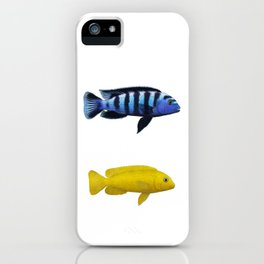 Malawi cichlids Chindongo saulosi pair iPhone Case