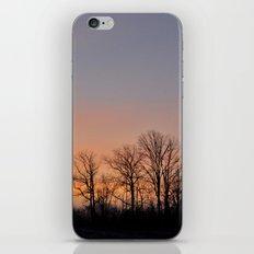 Bare Trees iPhone & iPod Skin