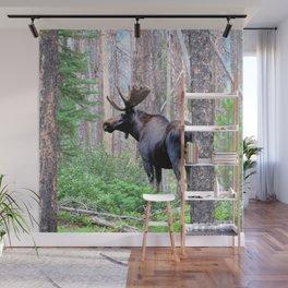 Watercolor Moose Bull 20, East Inlet Trail, RMNP, Colorado, King of the Woods Wall Mural