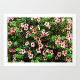 Wall of Flowers Art Print