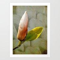 magnolia Art Prints featuring Magnolia by LoRo  Art & Pictures
