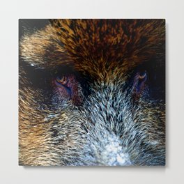 The North | Wild Boar Metal Print