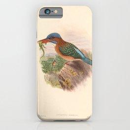 Actenoides Hombroni Kingfisher Vintage Birds iPhone Case