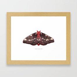 Splendid Royal Moth (Citheronia splendens) Framed Art Print