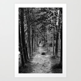 Glimpse into the forest | Landscape photography | Landscape photography wall art Art Print