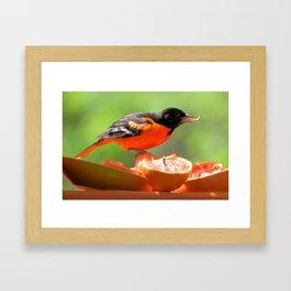 Orange & Black (Baltimore Oriole) Framed Art Print