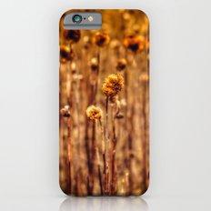 Sunflower Heads in the Winter Sun Slim Case iPhone 6s