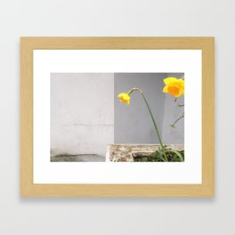Mellow Yellow Framed Art Print