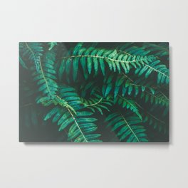 Ferns II Metal Print