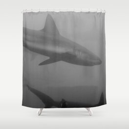 Galapagos sharks Shower Curtain
