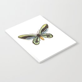 Butterflies: Queen Alexandra's Birdwing Notebook