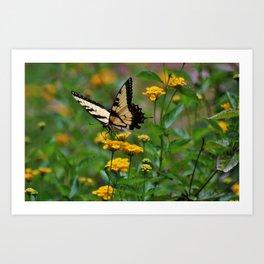 Swallowtail On Lantana Art Print