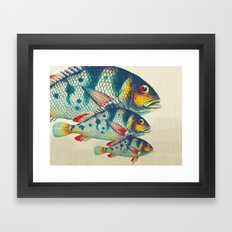 Fish Classic Designs 3 Framed Art Print