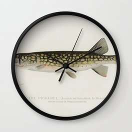 Pickerel (Lucius Reticulatus Le Sueur from a pond in Massachusetts) illustrated by Sherman F Denton Wall Clock