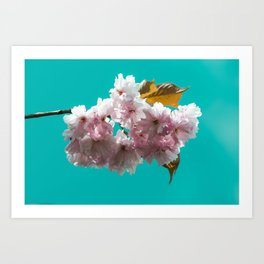 Cheery blossom green background Art Print
