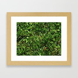 grass lawn texture Framed Art Print