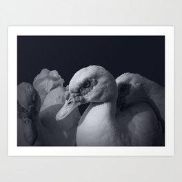 Three Ducks And One is staring. Art Print