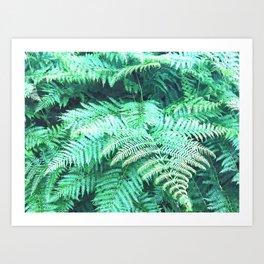 Fern tropical leaves watercolor Art Print